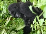 2004-berggorilla