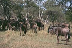 tiere-tansania